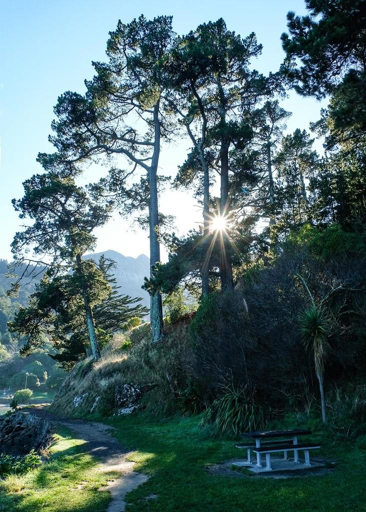 Path to Corsair Bay by maureenpp
