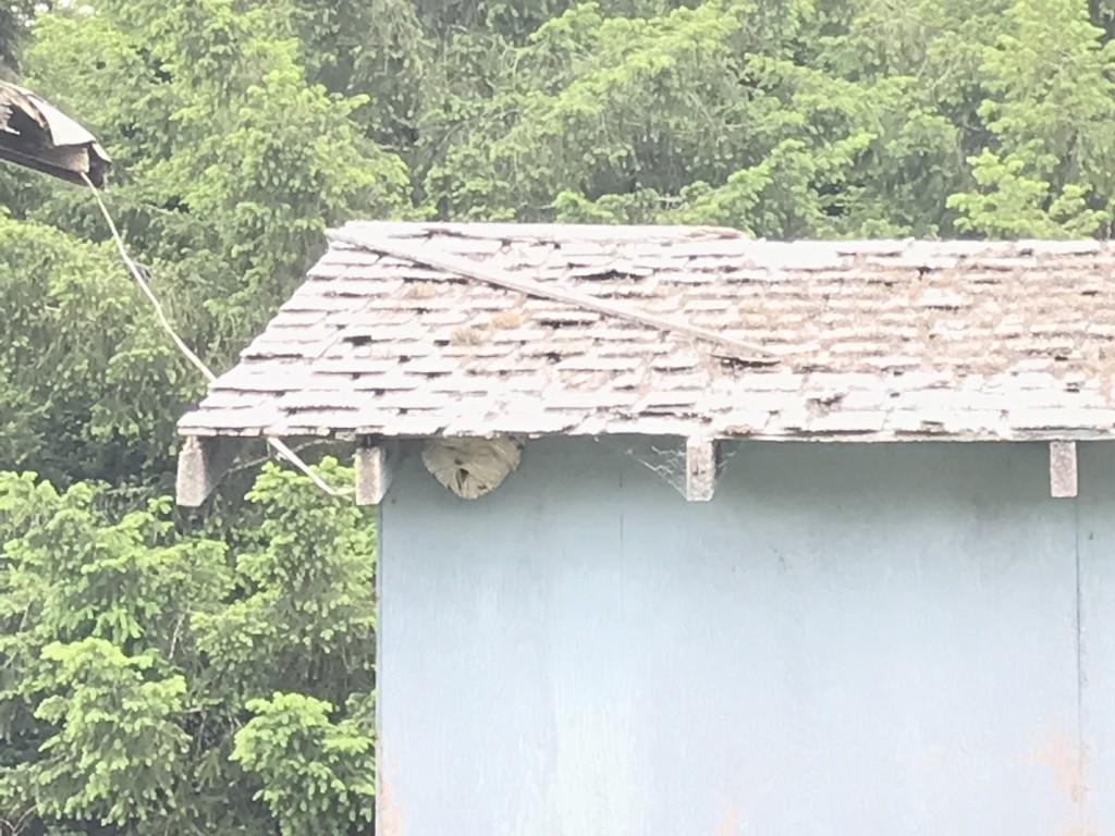 Hornets nest by pandorasecho