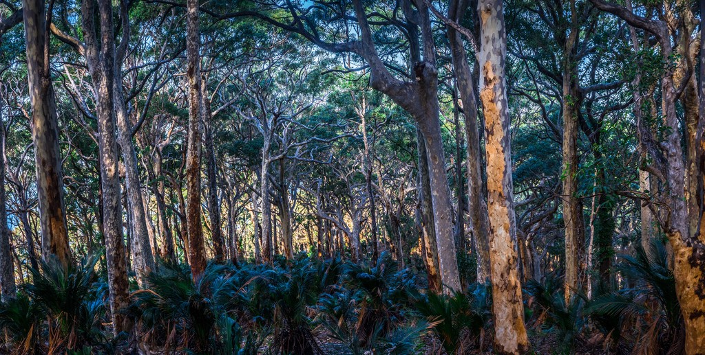 Primordial forest by pusspup