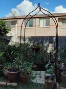 30th May 2020 - Winter Gardening