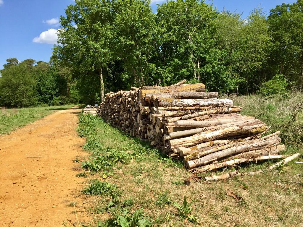 Log Pile by gillian1912