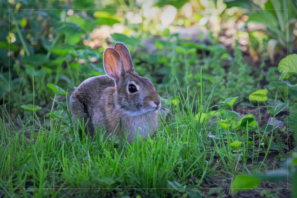 Bunny Company by lyndemc