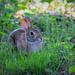 Bunny Company