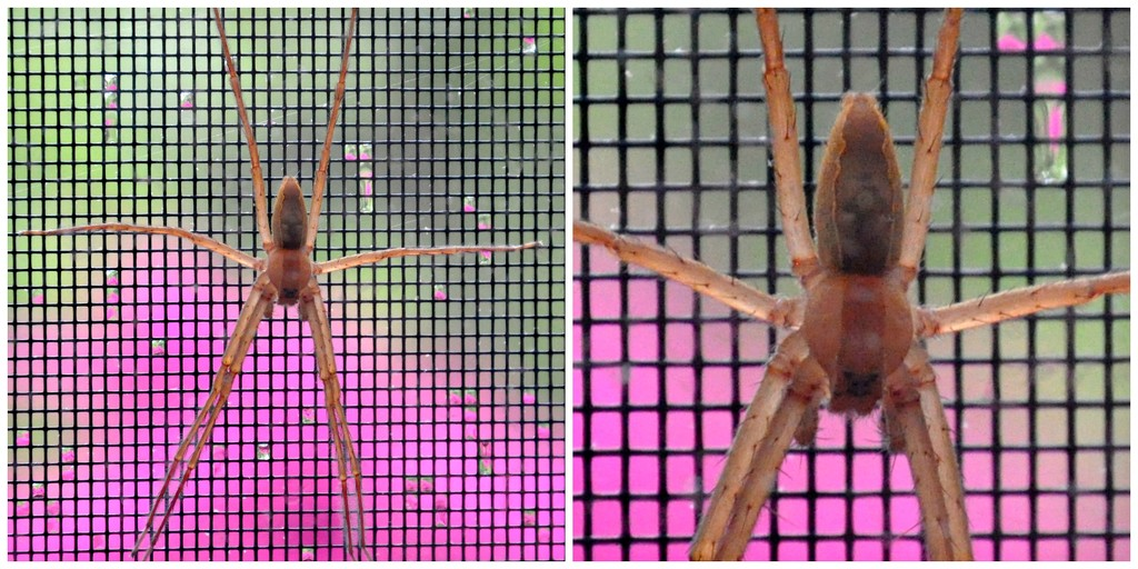 Spider on the slider screen. by sailingmusic