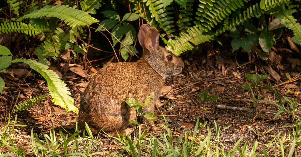 Bunny Rabbit in the Backyard! by rickster549