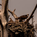 One of My Other Osprey Nest!