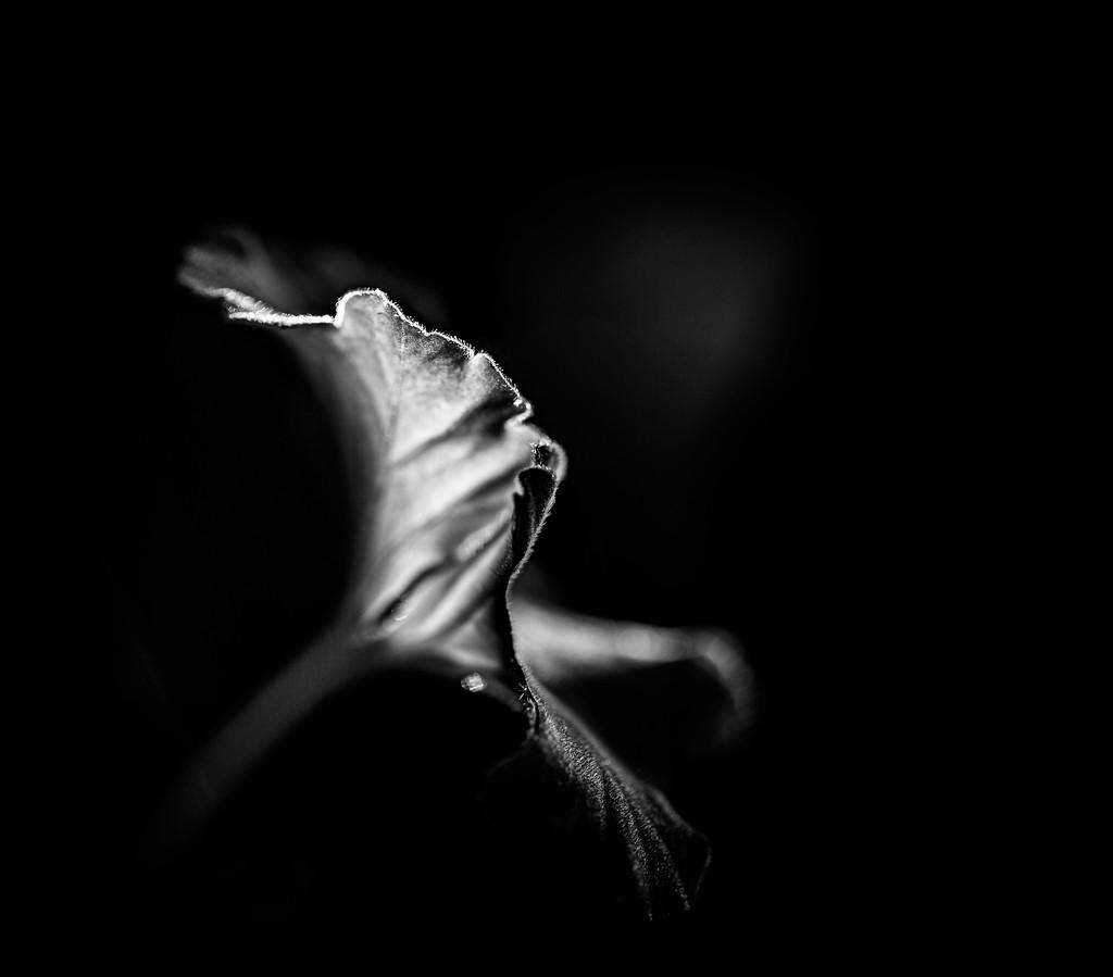 backlight by adi314