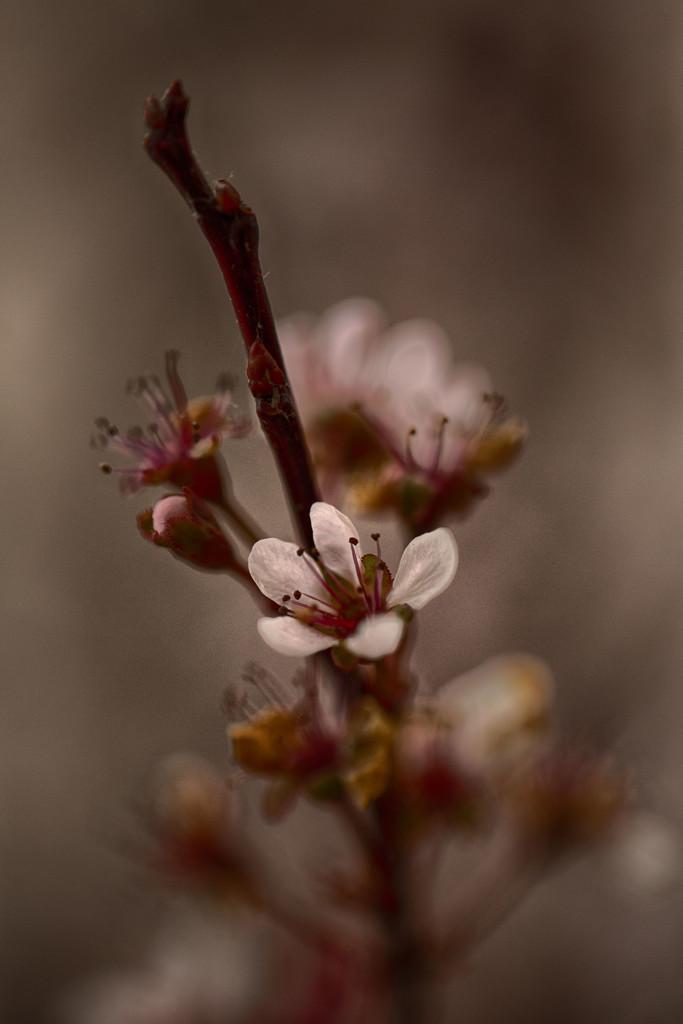 spring by adi314