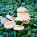Fields of fungi