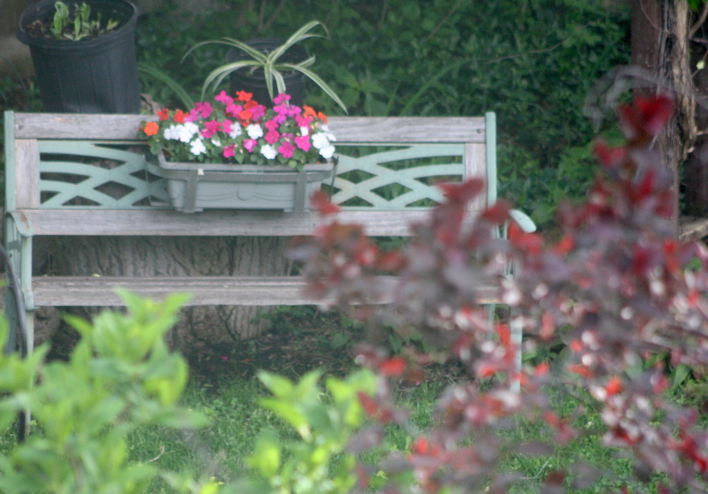 Decorated bench in our neighbor's garden by bruni