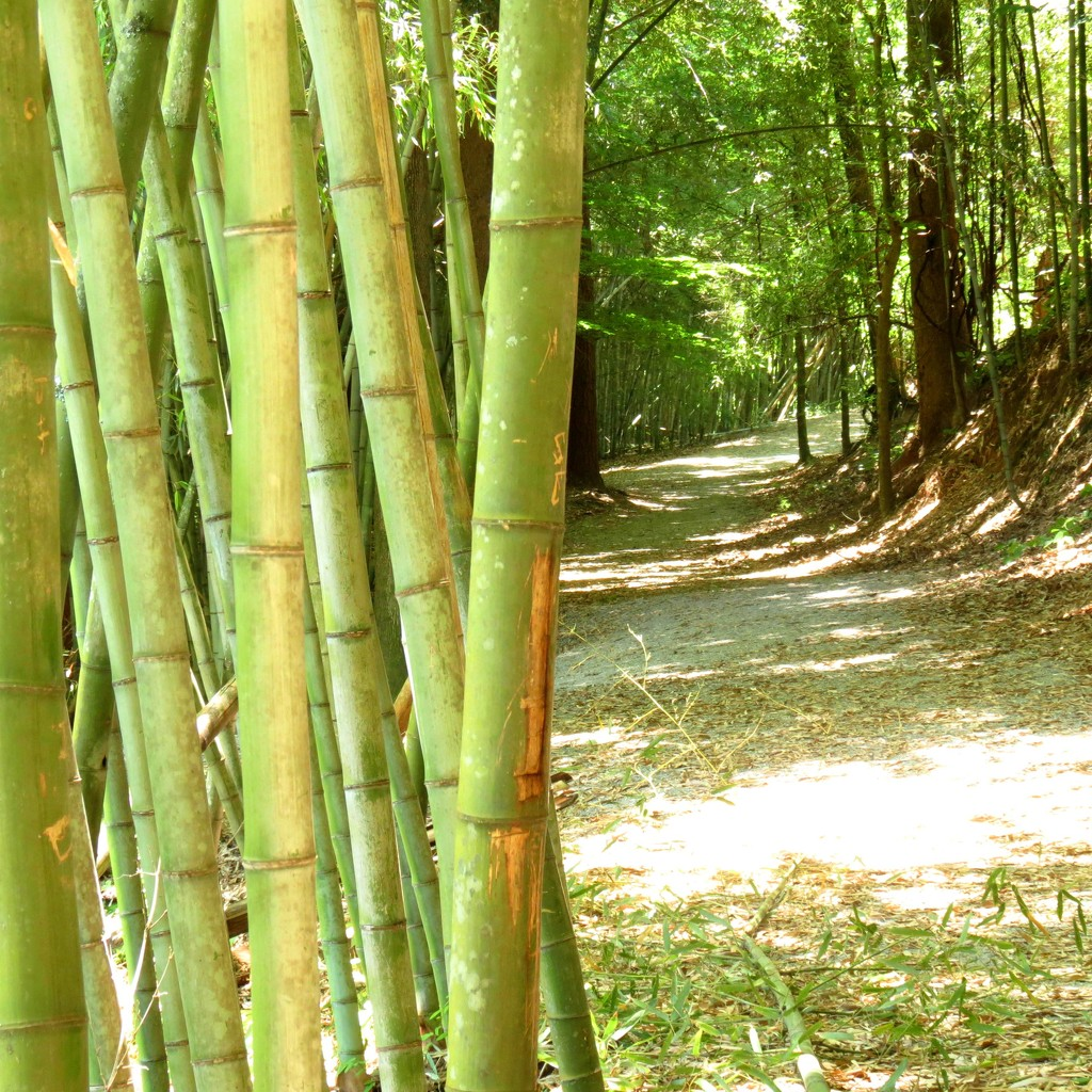 Final Foray Into the Bamboo Forest by grammyn