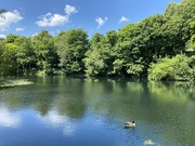 31st May 2020 - Walsall Arboretum