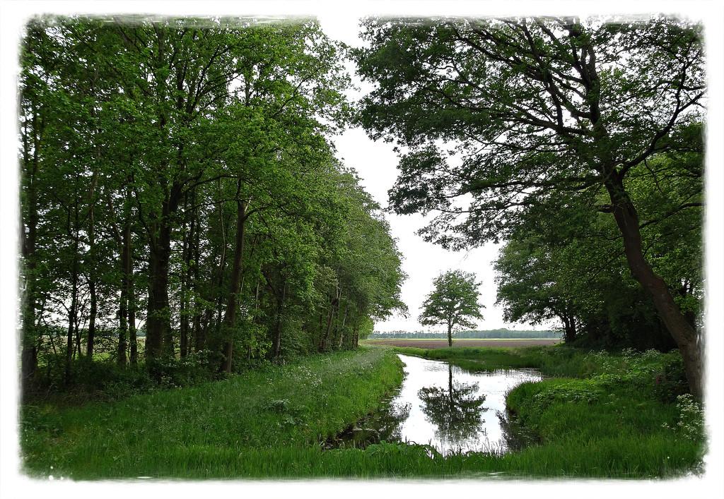beautiful nature by gijsje