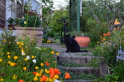 31st May 2020 - Yet another cat let loose during nesting season...