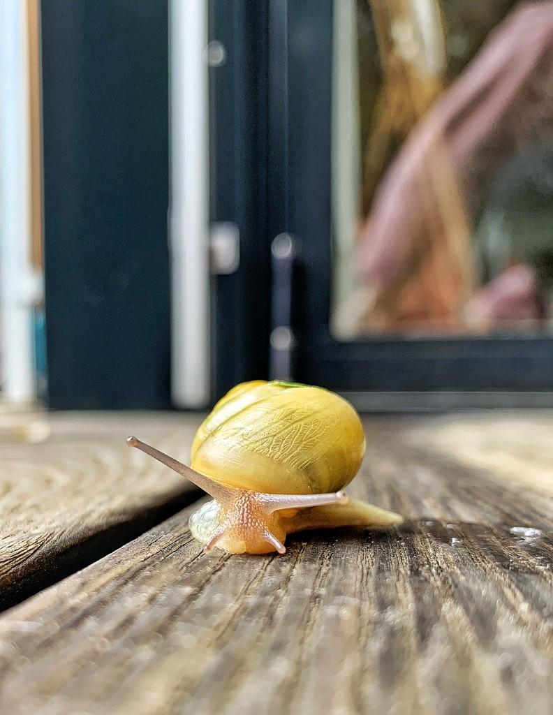 Snail by cocobella