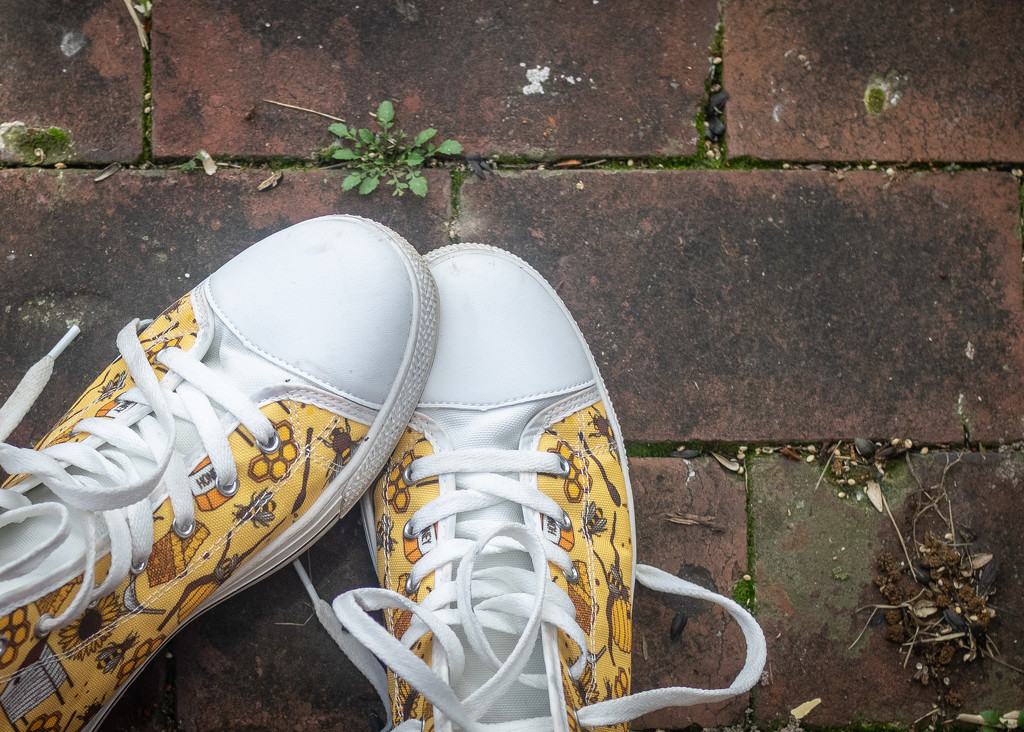 Bee Shoes by rosiekerr