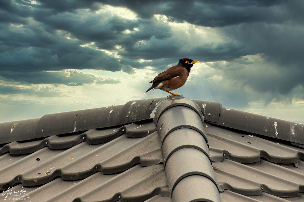 Bird on a Cold Tin Roof by yorkshirekiwi