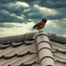 Bird on a Cold Tin Roof