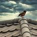 Bird on a Cold Tin Roof