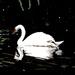 Swan (painting)