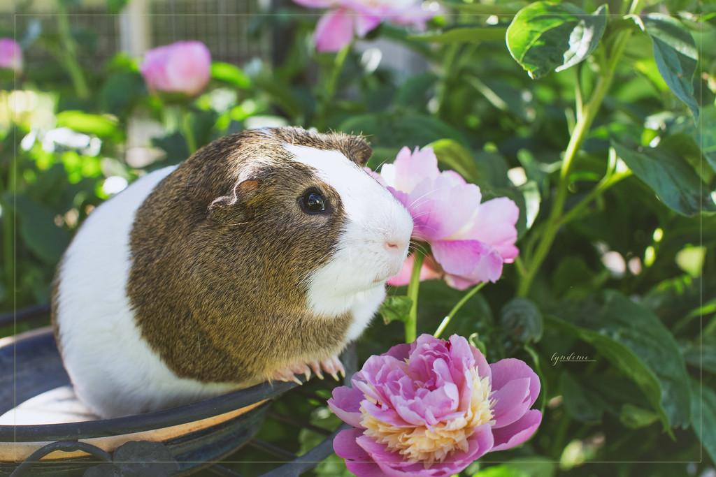 So Long, Little Piggie by lyndemc