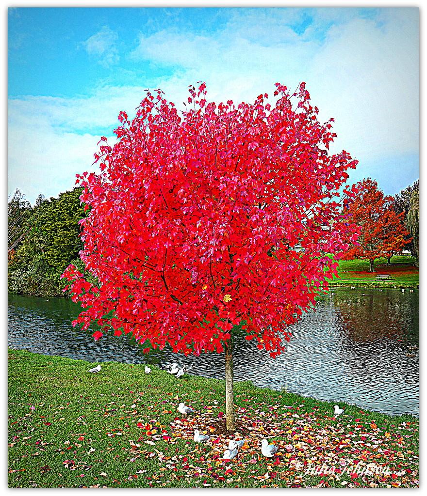 That Tree Again.... by julzmaioro