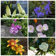 2nd Jun 2020 - Local Flowers
