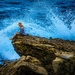Ocean Perch
