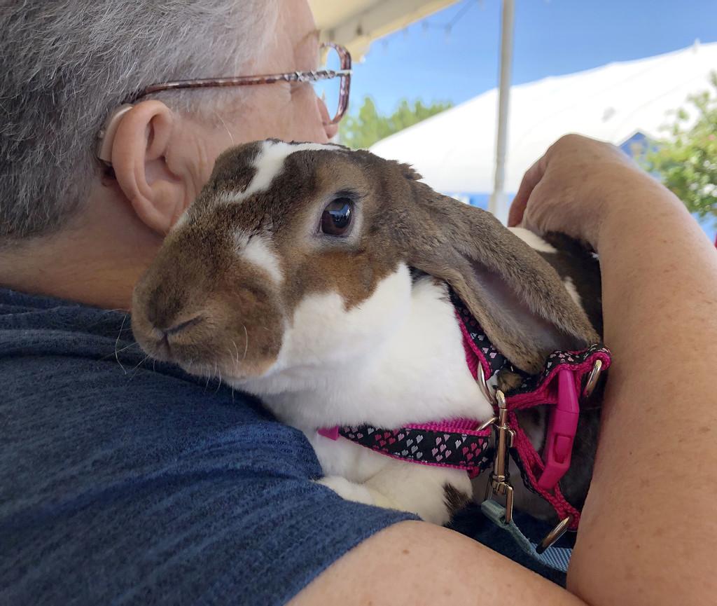 Theraputic Snuggle Bunny by homeschoolmom