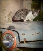1st Jun 2020 - Alley Cat