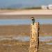 Kingfisher by yorkshirekiwi