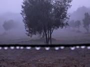 2nd Jun 2020 - Fog in the olive grove