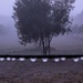 Fog in the olive grove
