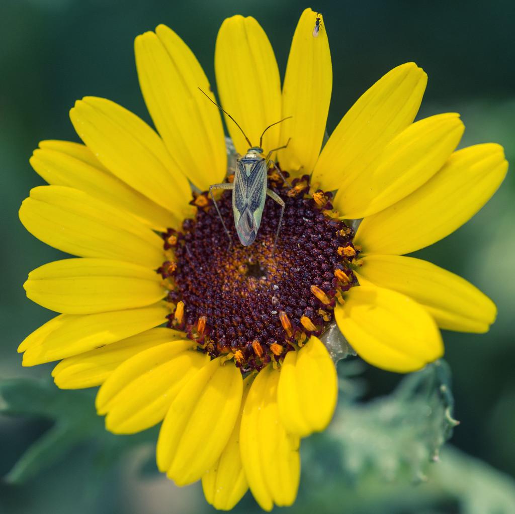 A bug's life by rumpelstiltskin