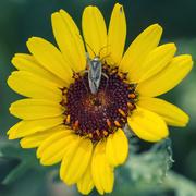 2nd Jun 2020 - A bug's life