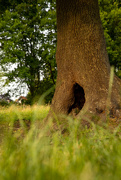 2nd Jun 2020 - The hole in the tree