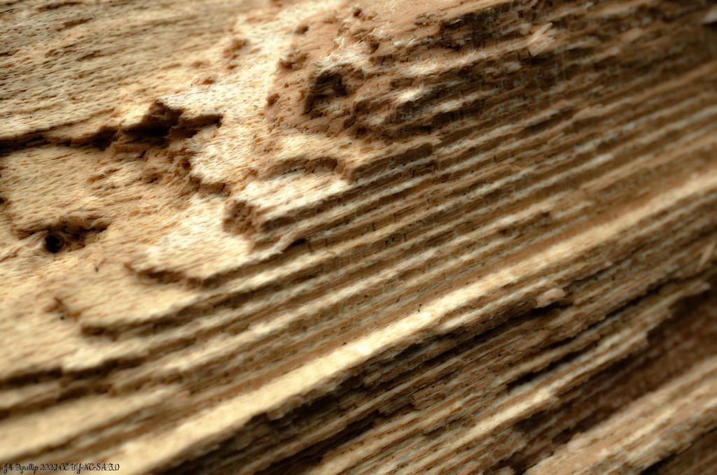Wood Grain by byrdlip