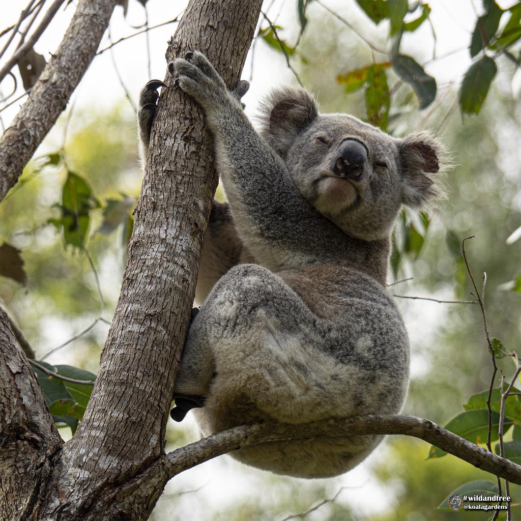 a la naturale by koalagardens