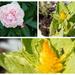 Todays beautiful flowers
