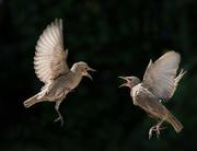 2nd Jun 2020 - Angry birds