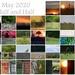 May 2020 Half and Half Calendar