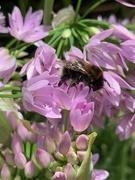 2nd Jun 2020 - Bee