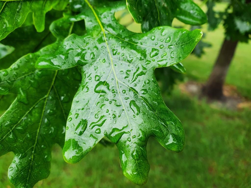 Rainy day by isaacsnek
