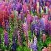 A splash of colors  by pyrrhula