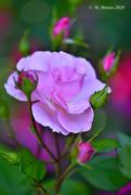 26th May 2020 - LEW_3565 - My Kinda Pink #32