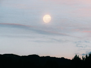 4th Jun 2020 - mooning about