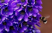 4th Jun 2020 - Delphinium & Bee 🐝