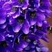 Delphinium & Bee 🐝