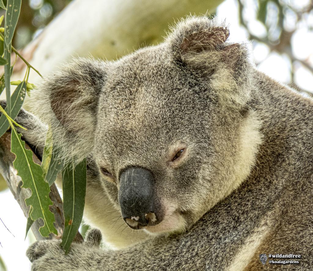 hard days night by koalagardens