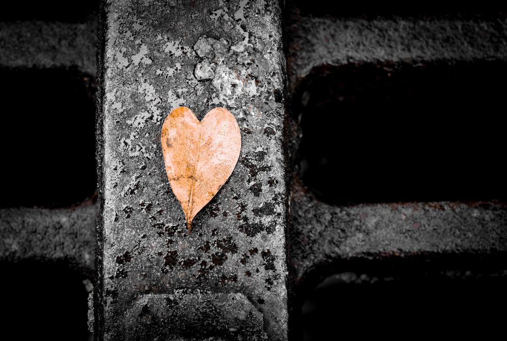 Amor mio  by shylaine3304